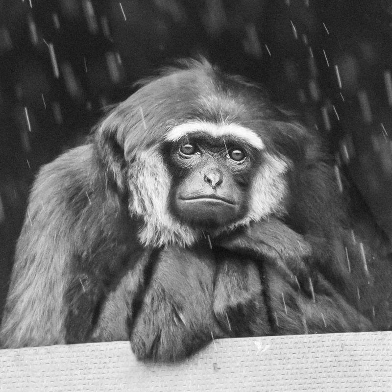 When-Will it stop raining C Diana Walker