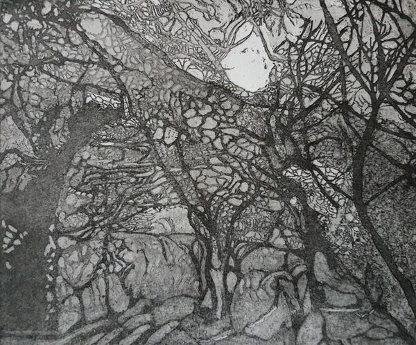 Black and  white image of woods in implied darkness with shadows from a moon