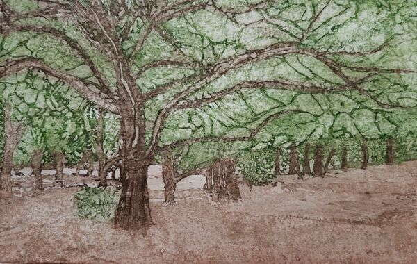 A series of trees on a mud foreground