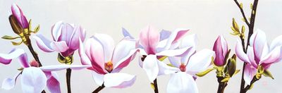 Magnolia - Life cycle