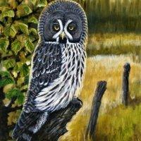 Great Grey Owl at evening
