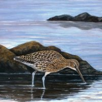 Curlew on a Calm morning