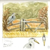 Heron on a gate, Grove Ferry