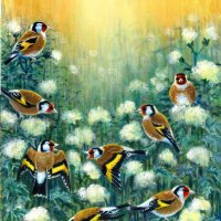 sunlight and goldfinches