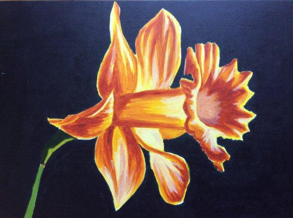Daffodil (after Georgia Keefe)
