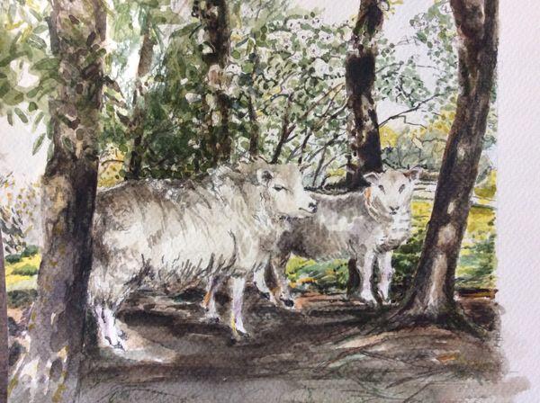 JANUARY 2021 - Hambleton sheep, watercolour by Janine Atkins