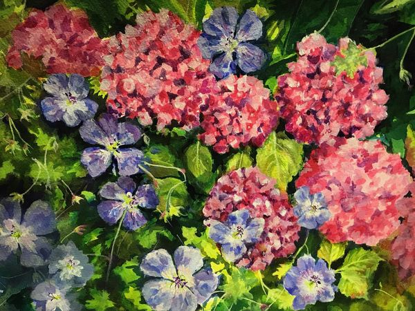 Hydrangeas & Geraniums