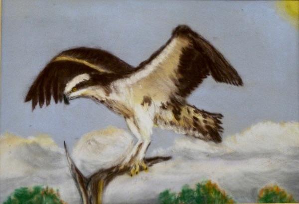 MARCH Osprey Rutland Water. Pastel by Colin Bath