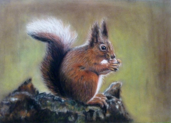 NOVEMBER Red Squirrel. Pastel by Janet Rogers