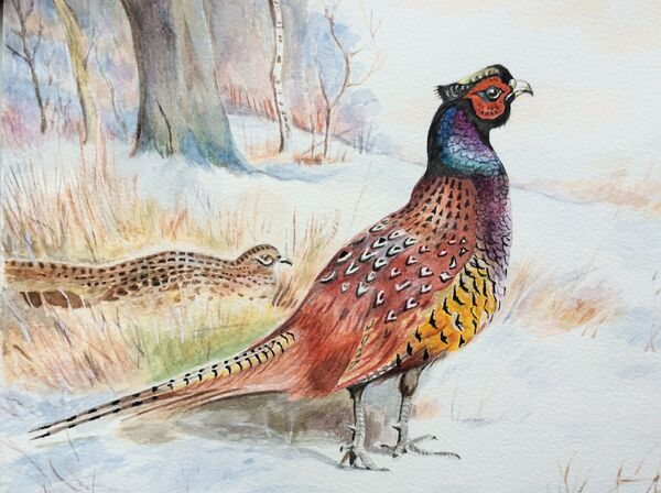 2. A pair of pheasants in the snow near Exton (JANUARY). Bruce Allison. Watercolour