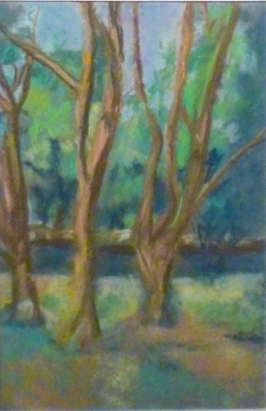 Trees in a Rutland Park