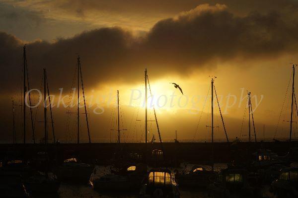Lyme Regis seagull swoop