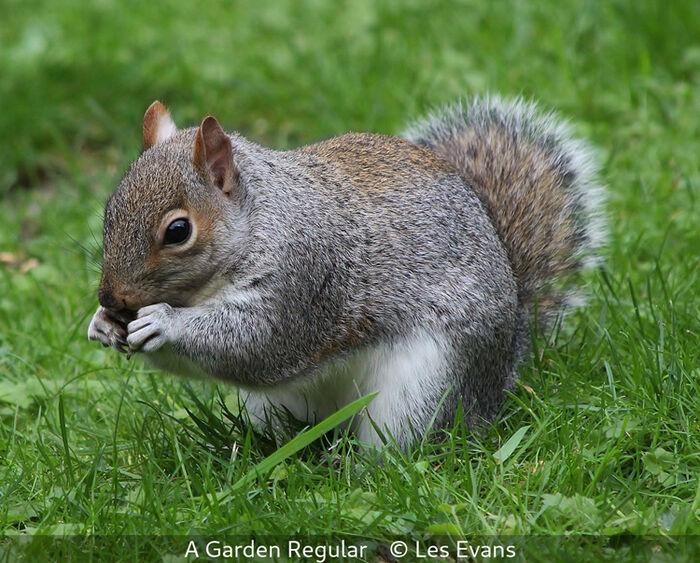 A Garden Regular
