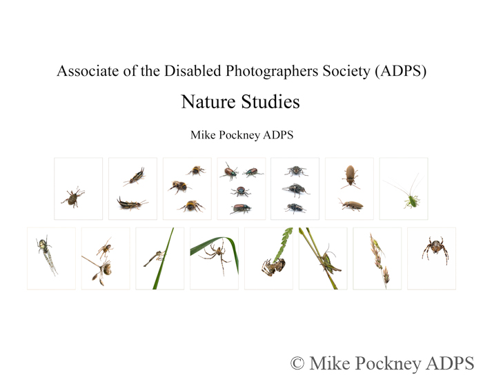 Mike Pockney ADPS