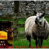 Lamb Chops Anyone?
