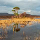 Loch Awe Island