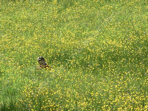 boy in the long grass