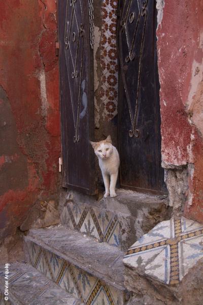 Marrakech - Janv 2013