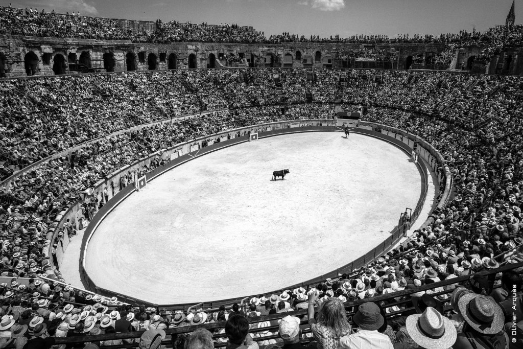 White sun and the bull - The arena in Nîmes