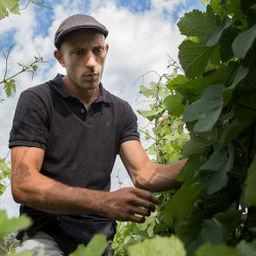 Vignes et vignerons au fil des saisons - Domaine Baud (Jura)