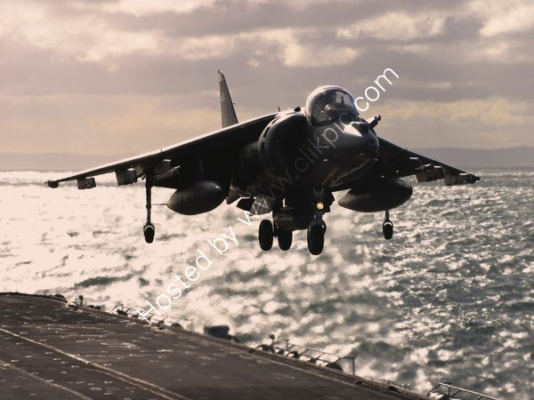 Harrier - nearly home