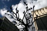 """""""Pigeon tree"""""""