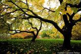 Autumn in St James's Park