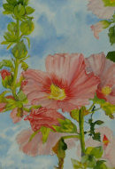 Peach Hollyhocks