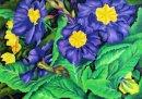 Primroses in Purple