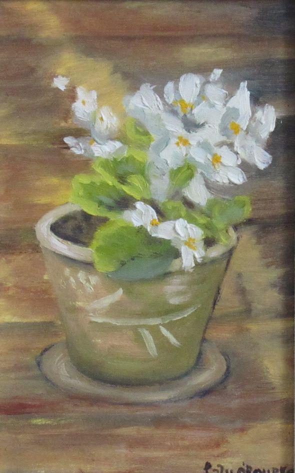 White Begonia