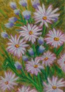Daisies in the Wild I.