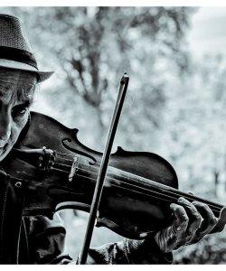 5611 The Fiddler Gray, Robert