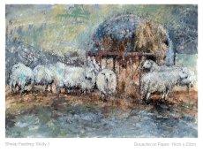 Sheep Feeding Study 1