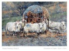 Sheep Feeding Study 2