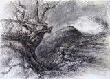 Castell Dinas Bran: Thorn Tree