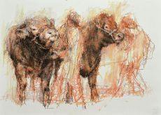 showing a bull and cow