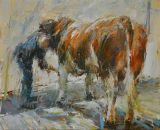 Washing a Hereford Bull. Study 1.