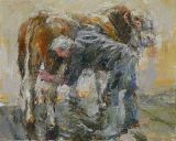 Washing a Hereford Bull. Study 2.