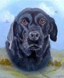 Labrador pet portrait from photo