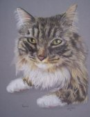 Long haired tabby cat pet portrait from photo