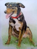 Mixed breed dog pet portrait from photo