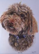 Poodle pet portrait from photo