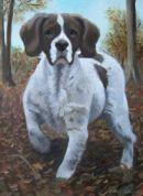Springer Spaniel pet portrait