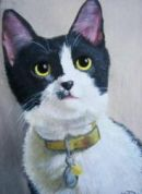 Pet portrait from photo, Melksham