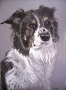 Collie pup pet portrait from photo