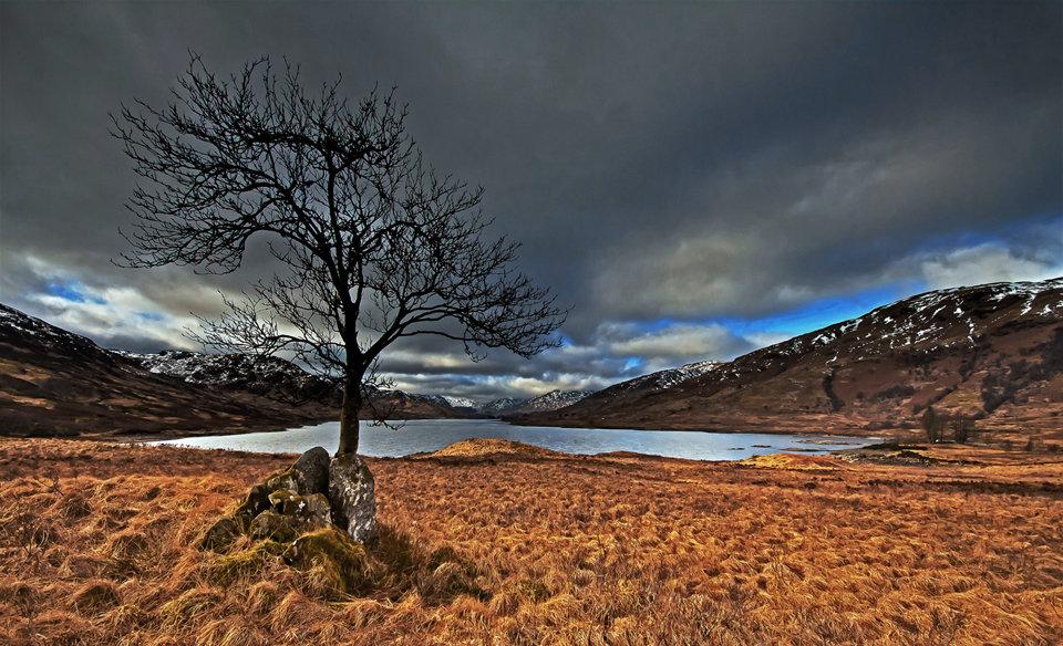 Tree at Loch Arklet