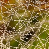 Differential Focus - Dew Drops