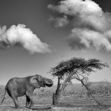 Elephant and Tree
