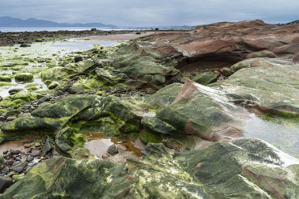 Seaweed on Sandstone