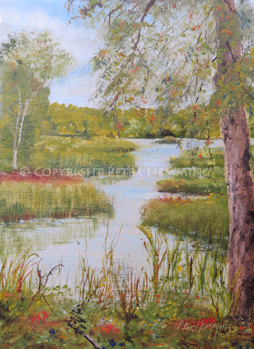 Joes Pond, Rainton Meadows